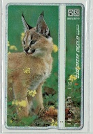 TELECARTE D ISRAEL ANIMAL SAUVAGE 3 T000007 CARACAL - Jungle
