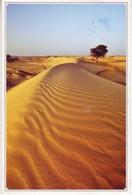 (99). Oman. Sand Desert. Dune - Oman