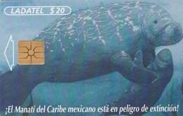 Mexico - Manatí Con Cria - Mexico