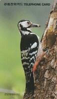 Korea South -  Bird - Woodpecker - Korea, South