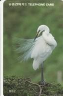 Korea South -  Bird - White Heron - Korea, South