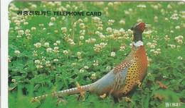 Korea South -  Bird - Pheasant - Korea, South