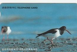 Korea South -  Bird - Black Headed Plover - Korea, South