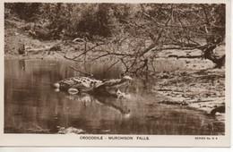 C.P.A. -  PHOTO - CROCODILE - MURCHISON FALLS - SERIES N° K 4 - EAST AFRICAN RAILWAYS AND HARBOURS - POSTÉE DU KENYA - Tierwelt & Fauna