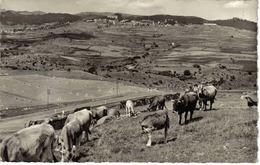 66 Font Romeu Vers Prades N°BF 43 Pâturage Troupeau De Vaches En 1950 Grand Hôtel Au Fond éditions MAR - Prades