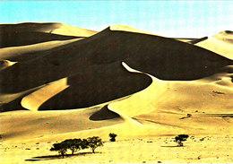 Dunes De TEMET Belle Cpsm 15X105 Bon état Voir Scans - Togo