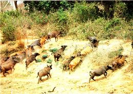 PARC DU W BUFFLES Dans La MEKROU Belle Cpsm Animée 15X105 Bon état Voir Scans - Togo