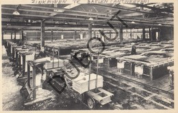Postkaart/Carte Postale BALEN Zinkmijnen Te Baelen - Vieille Montagne   (N778) - Balen
