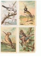 1928-620  7 Cp Oiseaux De France     La Vente Sera Retirée Le 28-07 - Pájaros