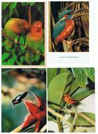 1928-620-631  10 Cp Oiseaux Divers    La Vente Sera Retirée Le 28-07 - Pájaros