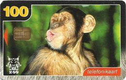 Estonia - Eesti Telefon - Tallinn Zoo - Chimpanzee - 09.1999, 100Kr, 10.000ex, Used - Estonia