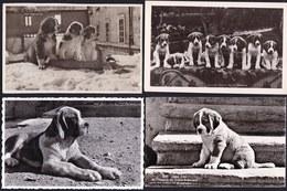 6 X CPA PHOTO - CHIEN - DOG - HUND -- SAINT BERNARD - BERNHARDINER - ST BERNARD - 6 Scans ! - Chiens
