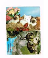 Lot De 8 Cartes.Animaux. - Animals