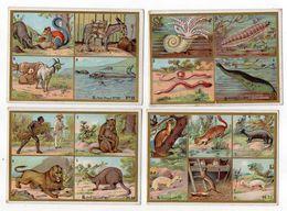 Chromo-- Chocolat  De GUYENNE -- Lot De 4 Chromos (animaux Divers) - Chocolate