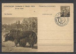 Czechoslovakia, Prague, Zoo, Wild Yak, 1957. - Interi Postali