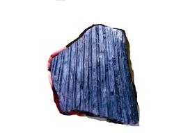 Fossiles Plante Du Carbonifère Carboniferous Plant Syrengodendron Rugosa 3 D. - Fossils