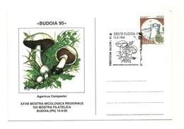 1995 - Italia - Cartolina Mostra Micologica Di Budoia    14/31 - Funghi