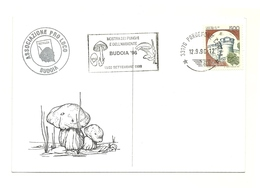 1996 - Italia - Cartolina Mostra Micologica Di Budoia    14/47 - Funghi