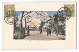 Japon Cherry Blossom At Benkei-bashi Akasaka Tokyo CPA Postcard - Tokyo