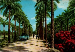 !  Modern Postcard Basrah - Seebah, Iraq, Auto, Car - Irak