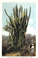 Dildo Cactus - Jamaica - British West Indies - Written - Stamp Postmark - 2 Scans - Cactusses