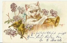 AK 1902 Katzen - Gatos