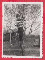 245008 /  Boy On The Tree , Vintage Original Photo ,  Bulgaria Bulgarie - Anonymous Persons