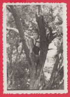 245010 / BOY On The Tree , Vintage Original Photo ,  Bulgaria Bulgarie - Personnes Anonymes