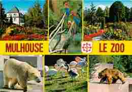 Animaux - Divers - Ours - Perroquets - Zoo De Mulhouse - Multivues - Voir Scans Recto-Verso - Animaux & Faune