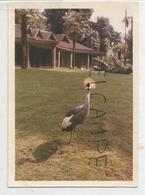 Photo De Grue Couronnée Dans Un Zoo. - Photographie