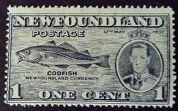 Terre Neuve New Foundland 1937 Animal Poisson Fish Morue Cod Yvert 208 * MH - 1908-1947