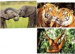 Lot 3 Cpm - Animaux En Détresse - IFAW / WWF - Tigre Orang-outan Singe éléphant - Éléphants