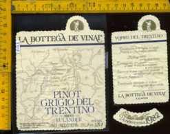 Etichetta Vino Liquore Pinot Grigio Del Trentino 1982 Rulander -Colavino TN - Etichette