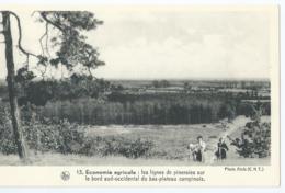 Economie Agricole - Les Lignes De Pinerales Sur Le Bord Sud-occidental Du Bas-plateau Campinois - België