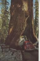 California : YOSEMITE : Yosemite National Park : The Tunnel - Avec Automobile -V W Coccinelle Rouge - Yosemite