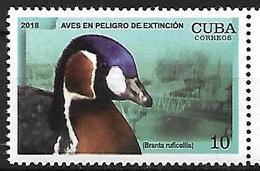 CUBA - MNH - 2018 -  Red-breasted Goose    Branta Ruficollis - Oies