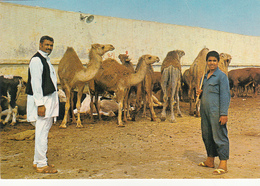 LIBYA - Benghazi - Sheep Market - Libya