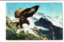 CPA - Carte Postale-Suisse - Aigle Dévorant Un Lapin -1912 VM4547 - Autres