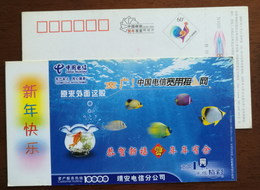 Carp Fish In Bottle,Tropical Fish In Ocean,CN05 Telecom Jingan Branch Broadband Access Service Pre-stamped Card - Fishes