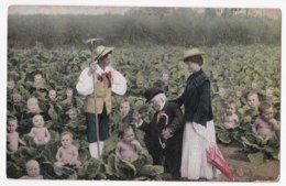 AK99 Multiple Babies In A Cabbage Field - Babies