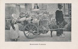CPA - Belgique - Maraîchers Flamands - Andere