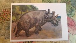 Uintatherium Herbivorous Mammal   - Rare Old Soviet Dinosaur Serie - Old USSR Postcard 1969 - Altri