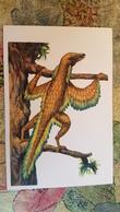 First Bird Archaeopteryx - Bird-like Dinosaur / 1969 Postcard - Oiseaux