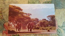 Africa / Kenya - Elephant Under Kilimanjaro - Kenya