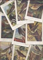 LOT DE 10 CPA - OISEAUX - Illustrations Signées - Oiseaux