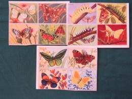 France Butterflies Pictures - Dechaux Ed. (5 X 4 Pictures) - Trade Cards