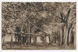 The Great Banyan Tree, Botanical Garden, Calcutta - India