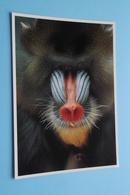 MANDRIL ( ZOO Antwerpen / Planckendael ) Anno 19?? ( AVM > Voir Photo ) ! - Monkeys