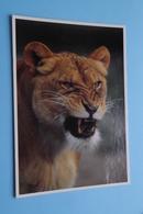 LEEUW - LION - LÖWE ( ZOO Antwerpen / Planckendael ) Anno 19?? ( AVM > Voir Photo ) ! - Lions