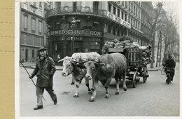 La France Sous Le Régime De Vichy . PARIS Bd De Rivoli  -  LA FETE DU TET -  Transport à Dos De Boeufs - Lieux